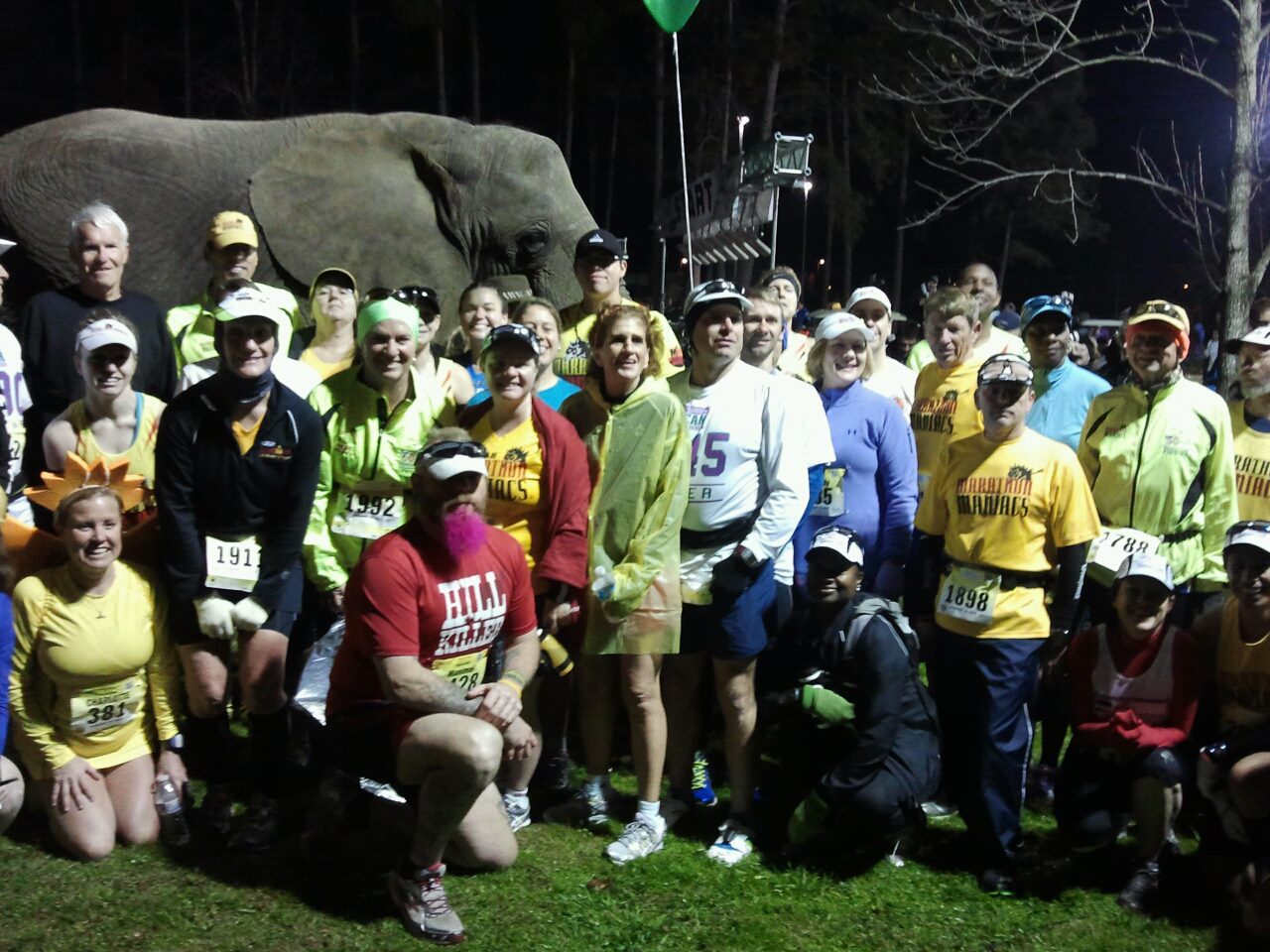 Oh you know, just your average starting line picture with an elephant.
